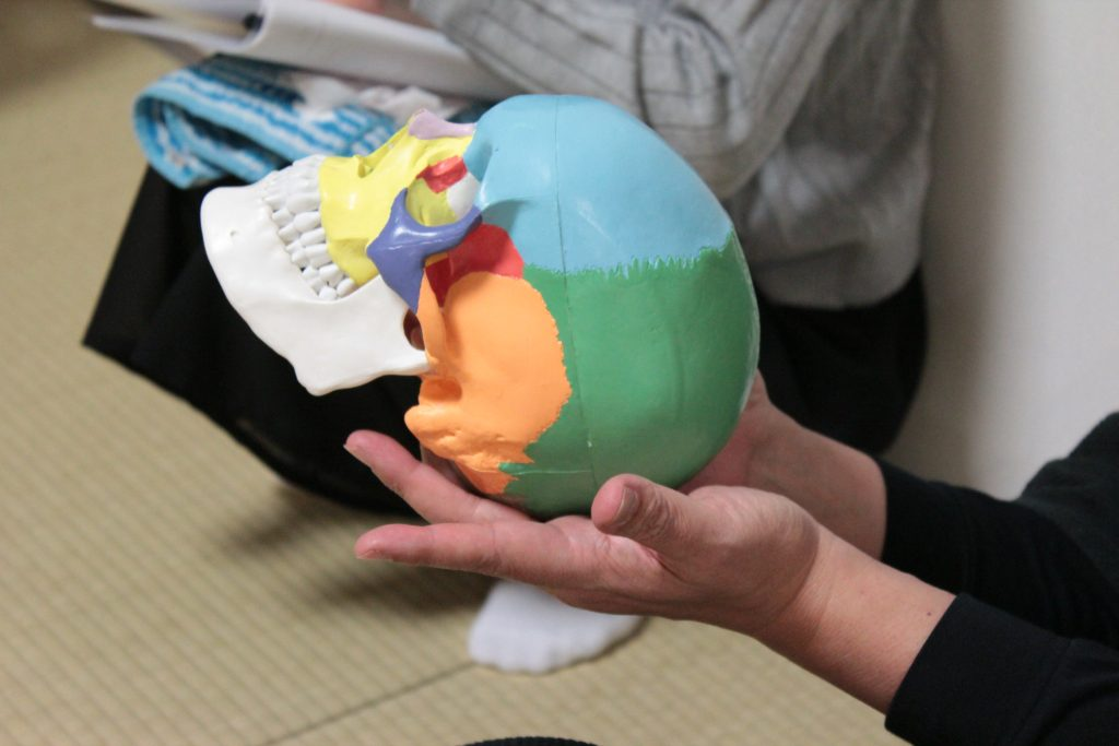 頭蓋骨の模型を使って解説